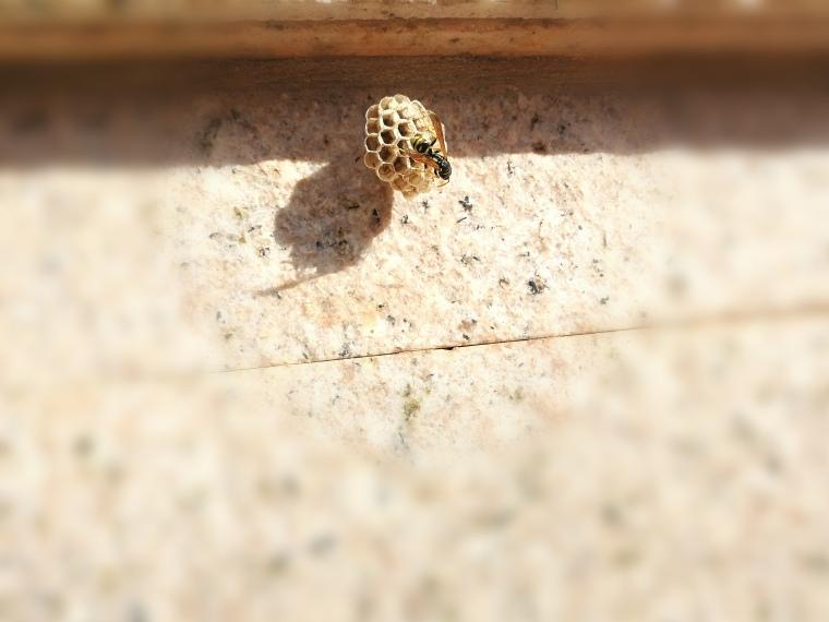 Rusc de vespes